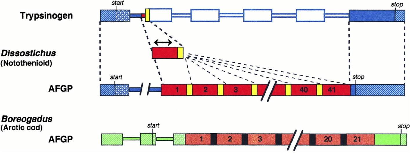 Discontinuous steps in the origin of antifreeze genes (figure from Logsdon and Doolittle, 1997).