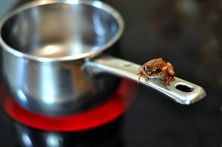 Frog on a saucepan. Image from wikipedia (http://en.wikipedia.org/wiki/Boiling_frog)